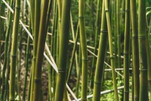 bamboe ecologisch verantwoord