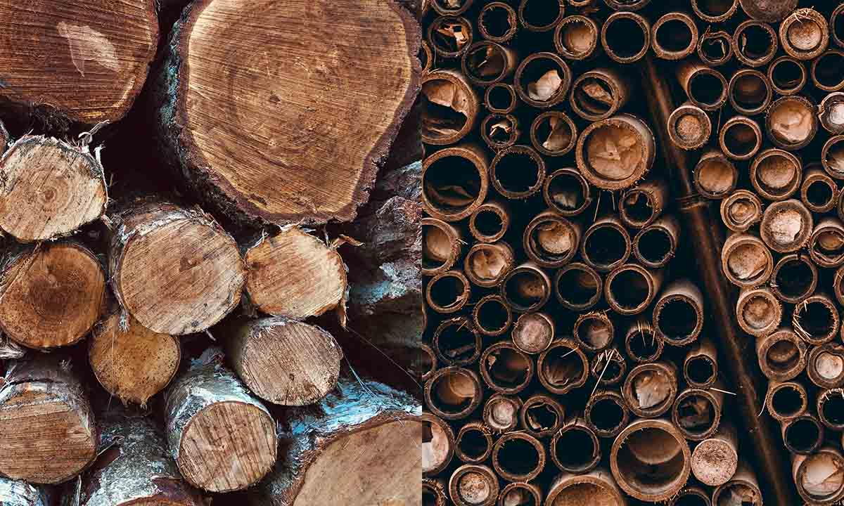 bambou ou bois