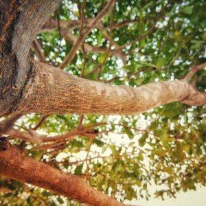 houten deegrol