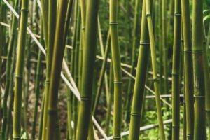 ist bambus nachhaltig